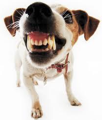 Tips en adviezen tegen slechte adem bij honden