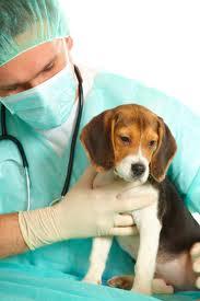 tandarts voor honden