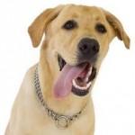 hond stinkt uit bek tong
