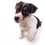puppy adem