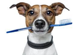 slechte adem hond verhelpen