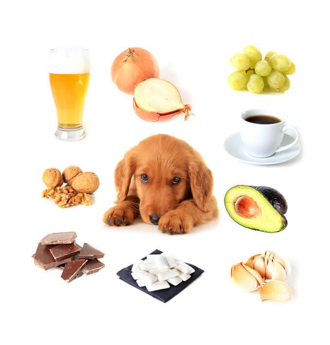 estrés bij honden voorkomen diabetes